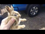 Baby Bunny Attacks