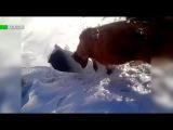 Обман зрения: в Казахстане коровы «исчезли» под снегом