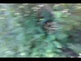 Копаем колодец в лесу. На роднике.