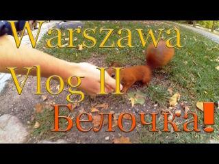 Белка. Эксперимент. Шопен. Курс польского языка. l VLOG 2