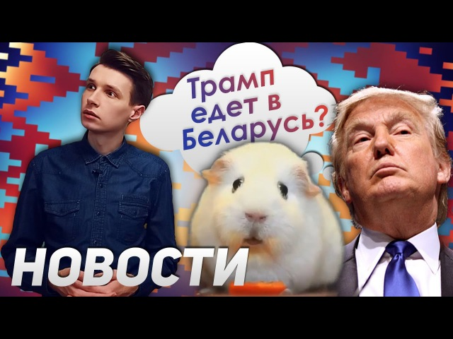 Задумчивая морская свинка. Летающие спасатели в Дубае. Трамп едет в Беларусь?