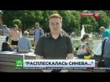 Расплескалась синева и удар корреспонденту НТВ в прямом эфире