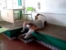 exc pelea de Andreina   julissa en la 1 - body to body in schoolgirl skirts
