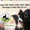 Приют для бездомных животных Дино Волгоград