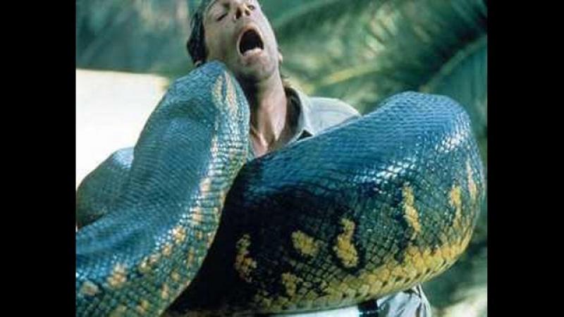 Нападение змеи! 18 Слабонервным не смотреть