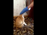 Мстительный кот убийца