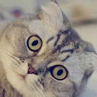 Кастрация кота в курске
