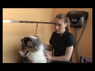 Экспресс-линька для домашних питомцев | GROOM - Стрижка собак и кошек | КрикТВ - мед. эксперт.