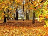 Жан Татлян. Осенний свет.  .