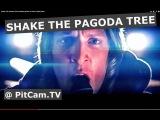 SHAKE THE PAGODA TREE