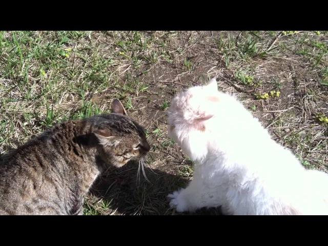 Кот Боня ругается матом (жара)