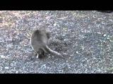 Серый кот поймал крота