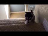 Впервые на видео запечатлили призрака собаки