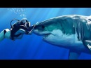 Sharks Love To Be Petted They're Like Dogs