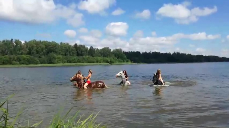 Прекрасные девушки и кони