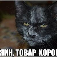 Анкета Миша Тиунов