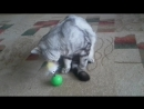 мой кот яша