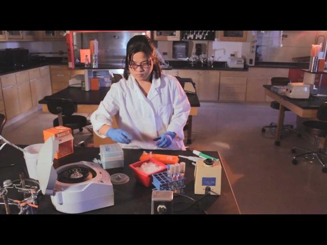 Isolating Plasmid DNA