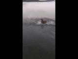 Когда что-то коснулось тебя в воде