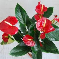 Купить комнатные цветы в курске купить сажкнцы розы недорого в москве