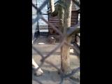 05.2017_Зинаида и Зоопарк 037