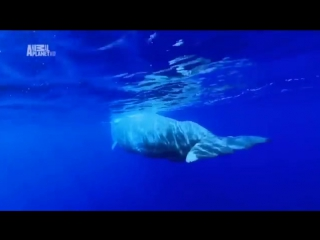 Atlantic ocean underwater animals