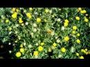 Цветы-сорняки в саду