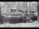 Куда пропали Сибирские Гиганты Деревья Исполины