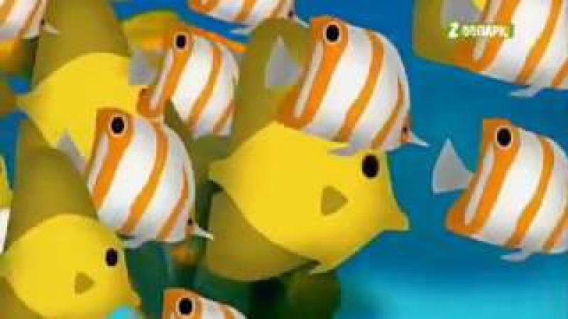 Путешествие в животный мир. Рыбы.
