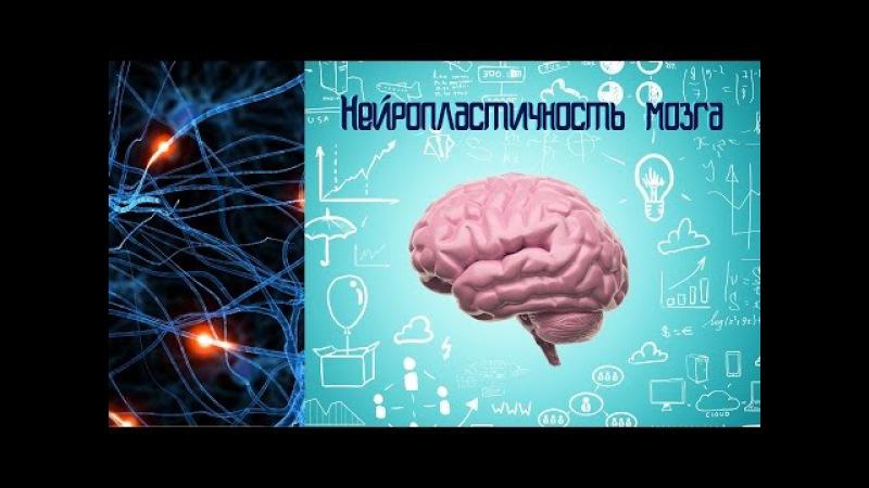 Мозг изменяющий себя сам Нейропластичность Мозга Часть 1