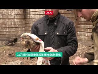 Сотрудники питомника Холзан выпустили в природу реабилитированных двух птиц