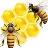 portalmeda.ru - польза пчелопродуктов