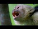 BBC Гении из царства животных (2 серия)