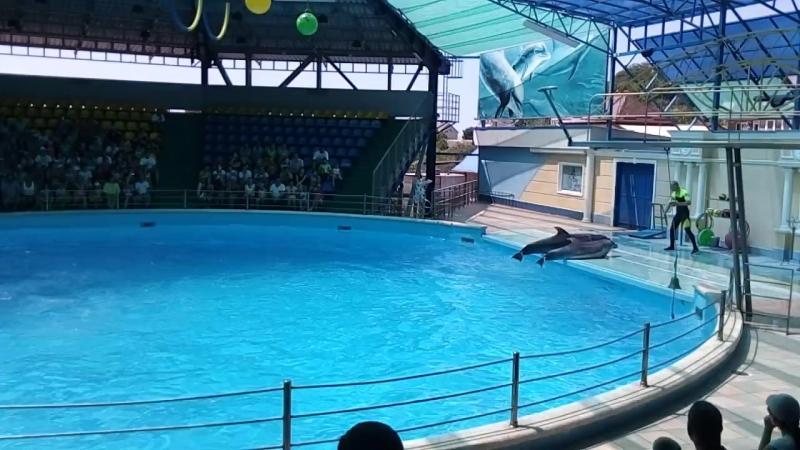 дельфинарий в п.Небуг.игра в мяч
