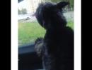мой любимый пёс