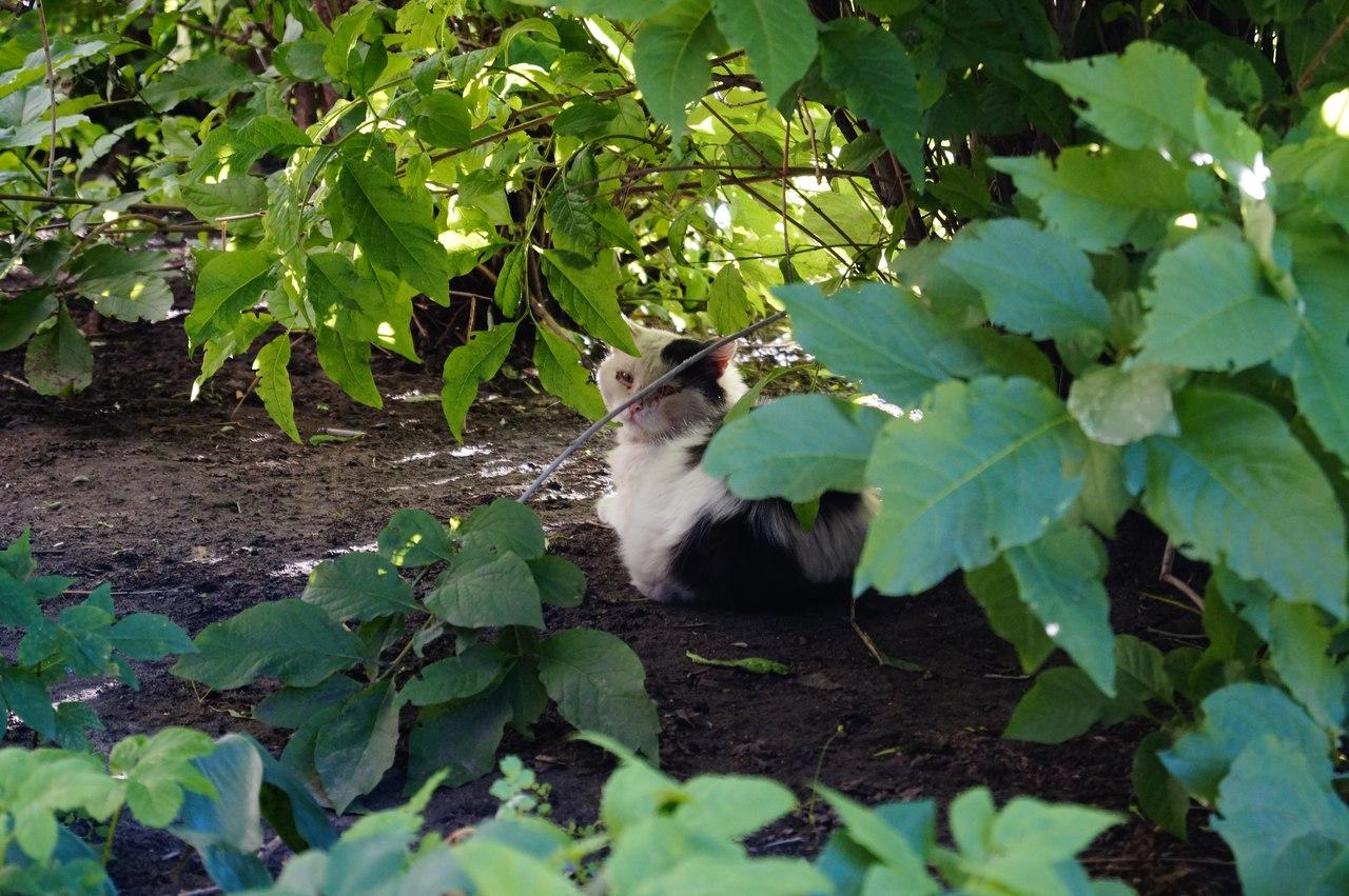 Придомовые кошки