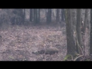 Отличная охота на дикого кабана. Видео коллекция хороших выстрелов