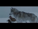 Белый плен  Eight Below (2006)