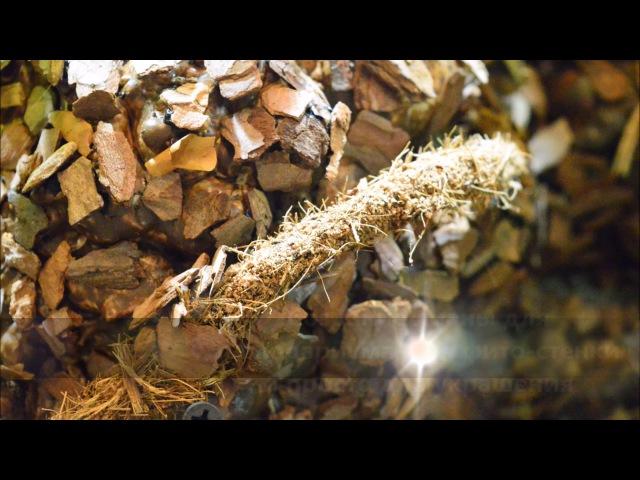 Создание лианы для палюдариума фитостен своими руками