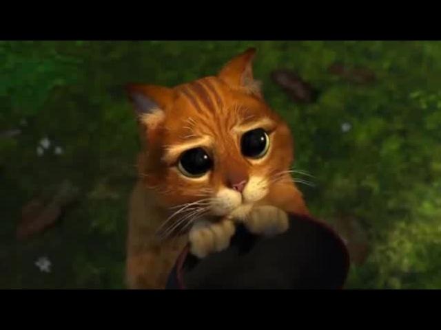Глазки кота - Шрек