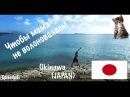 Я у мамы путешественник - Окинава, японский рай и кошачий магнит