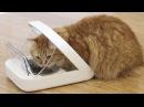 6 Вещей которые ПОНРАВЯТСЯ вашей кошке
