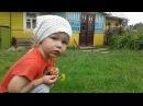 Watching chickens with a hen in a village | Просмотр куриц и петуха в деревне