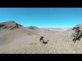 Охота на лису с орлом