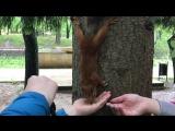 Белочка в парке на Курортном бульваре г.Кисловодск