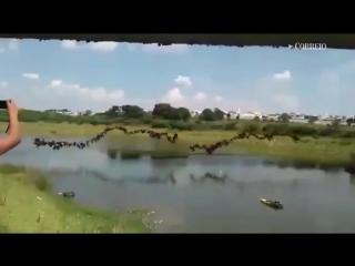 149 человек одновременно прыгнули с моста (6 sec)