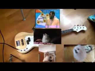 Gorillaz - Feel Good Inc. (Memes Cover)