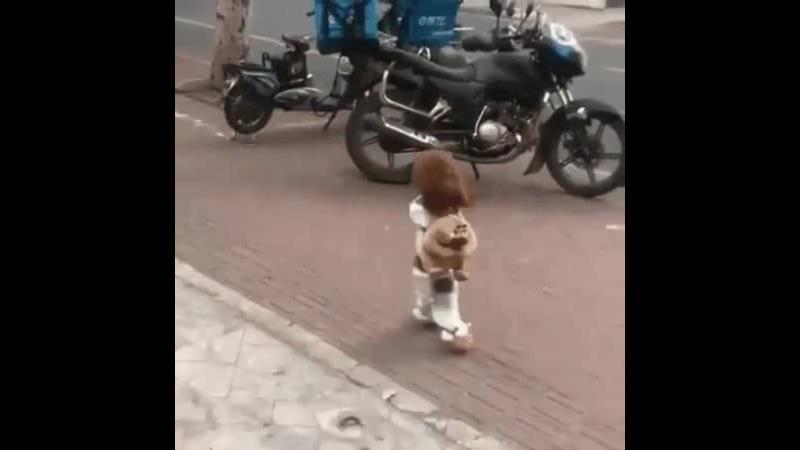Деваха бежит, торопится на dog show наверное