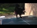 Ping pong - Dog vs Cat