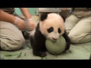 Лучшая профессия в мире обниматель панд